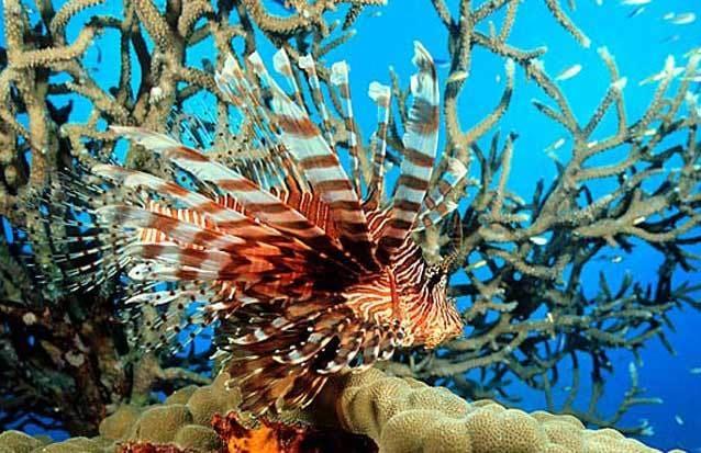 Excursion dans la mer, Île maurice
