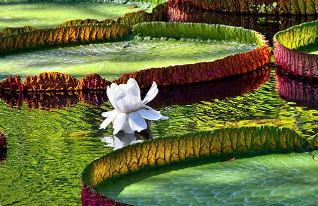 Découvrez un des plus beux jardin botanique au monde !