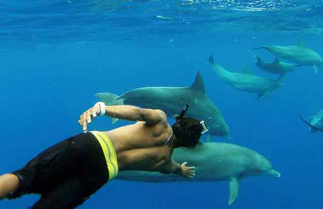 ile maurice : nagez avec les dauphins