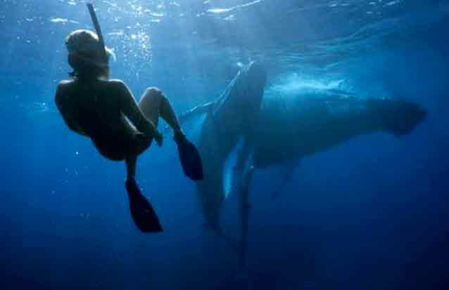 ile maurice: observez els baleiens et cachalots dnas leur environnement naturel