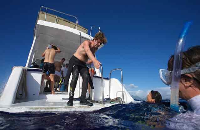ile : plongez au milieu des dauphines et des baleiens