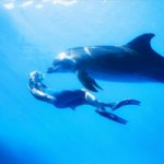 ile maurice : nagez avec les dauphins & observez les baleines (sortie bateau)