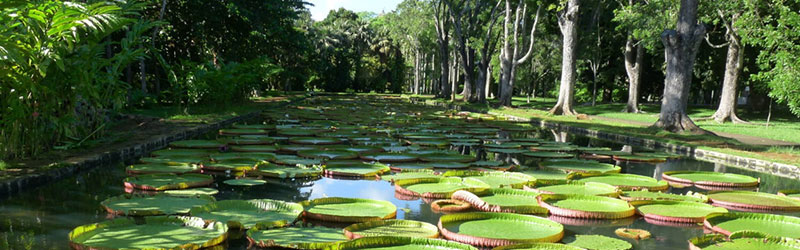 What to do in Port Louis, Mauritius : Pamplemousses Botanical Garden
