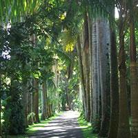Activités île Maurice : Jardin Botanique Pamplemousse