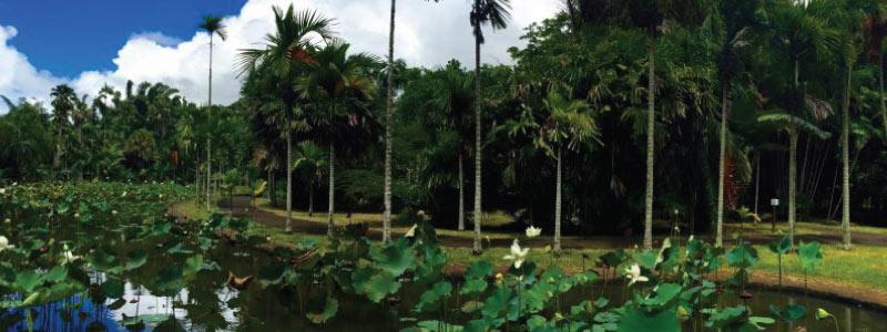 jardin.p