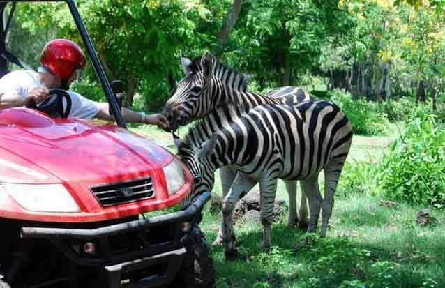 Casela : partez à la rencotnre des zebres et des lions en safari