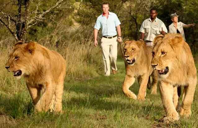Casela: marchez en compagnie des lions de la réserve naturelle