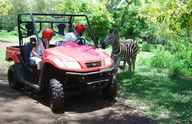 ile Maurice: rencontrez les animaux de l'ile maurice (zebre) en quad
