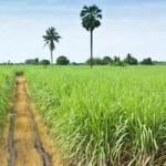 Excursion Maurice : sur les traces de la canne à sucre