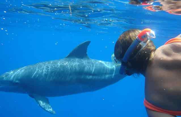 ile maurice : nagez avec les dauphins à Long becs